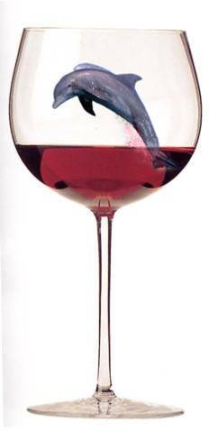 Wine-glass-Dolphin-for-blog